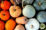 assortment of winter squash grown in north texas