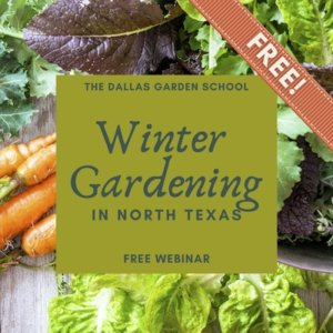 class winter gardening in north texas